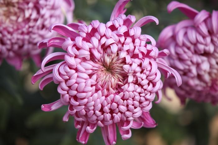 Flori 146