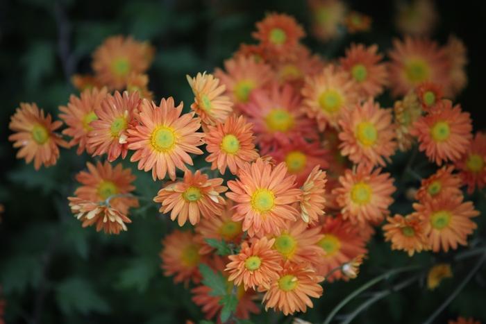 Flori 188