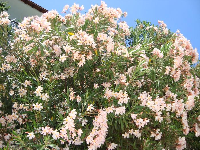 Flori 214
