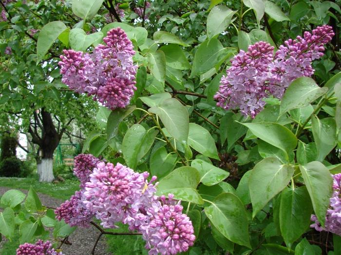 Flori 266