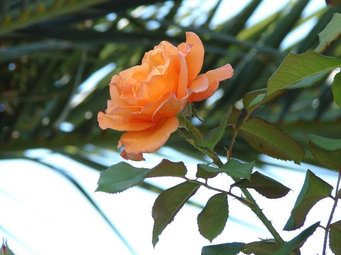 Flori 290