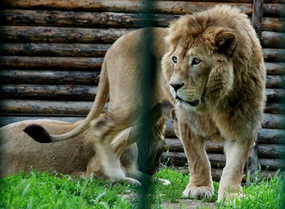 Zoo-sibiu3