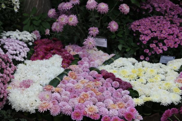 Flori 151