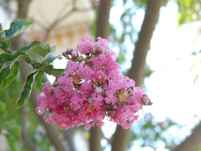 Flori 283