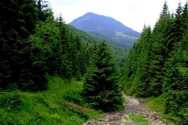 Parcul-Mtii-Rodnei3