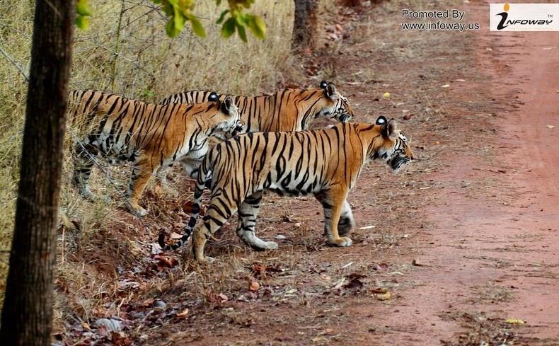 Sundarbans2