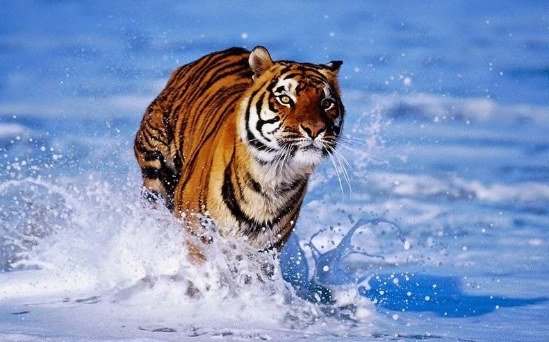 animale-India11