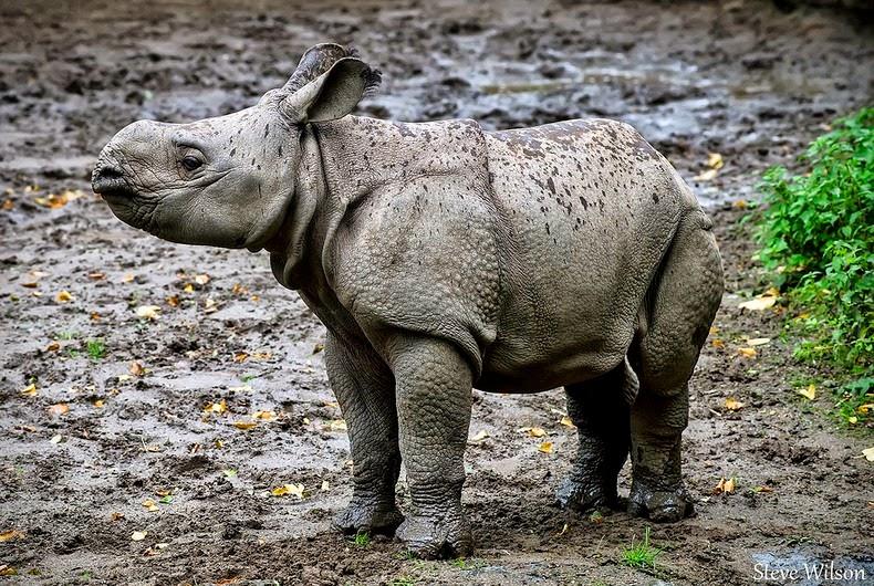 animale-India6