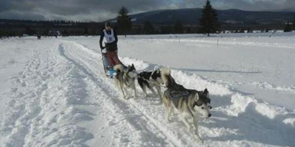Dragostea dintre om şi câine – povestea de succes a concursurilor de atelaje trase de câini arctici