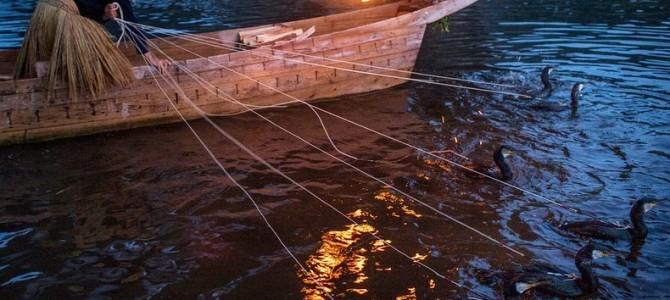 Ukai – arta japoneză de pescuit cu cormorani