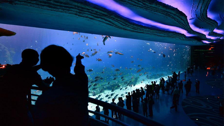 Chimelong Ocean Kingdom5