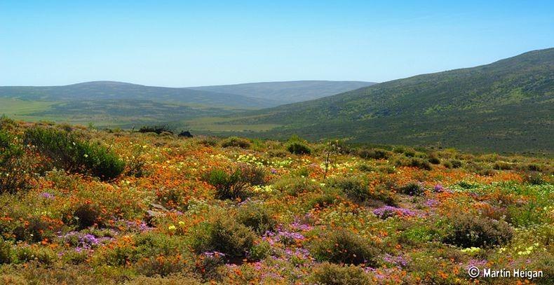 Namaqualand-flori1