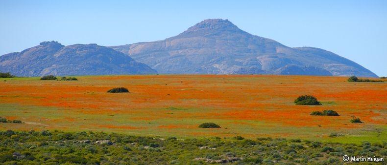 Namaqualand-flori7