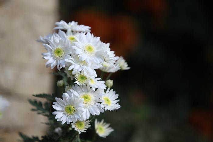 Flori 083