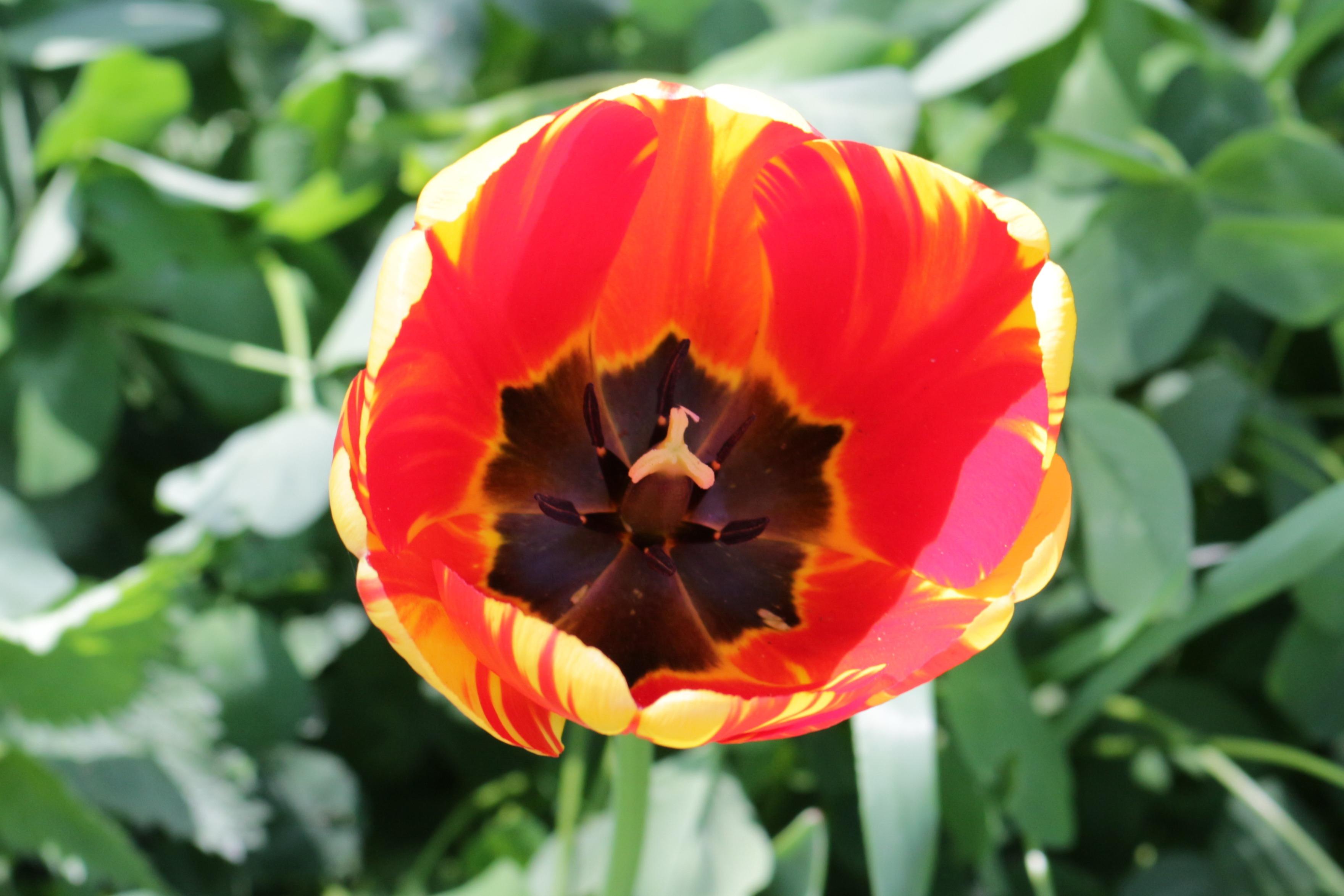 Flori-lalea06