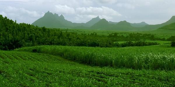 Mauritius, insula trestiei de zahăr