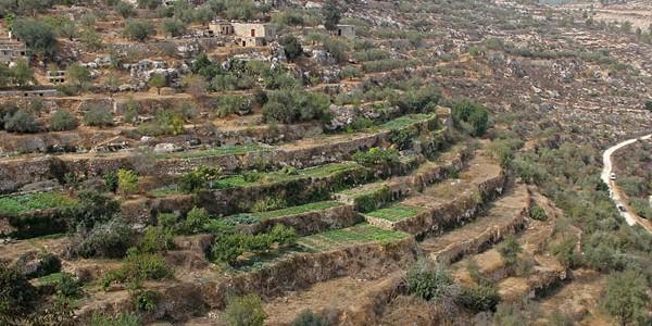 Tărâmul măslinilor şi viţei de vie din Battir