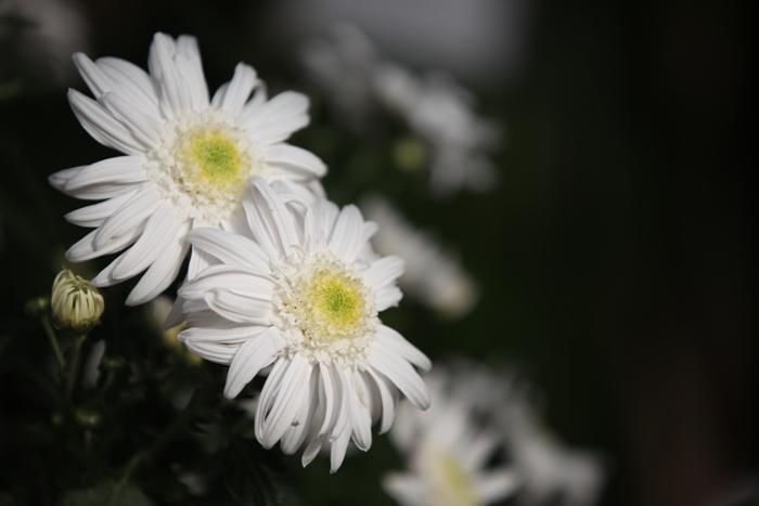 Flori 108