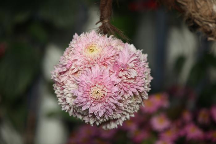 Flori 119