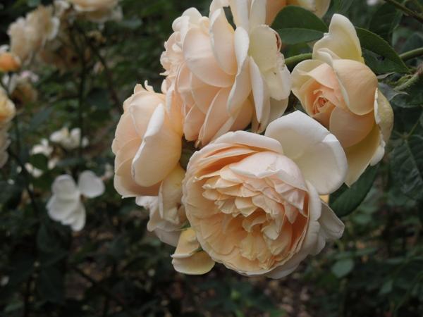 Flori 344