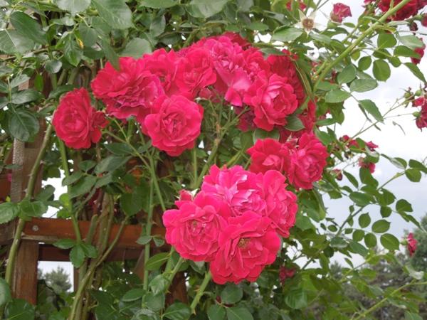 Flori 346