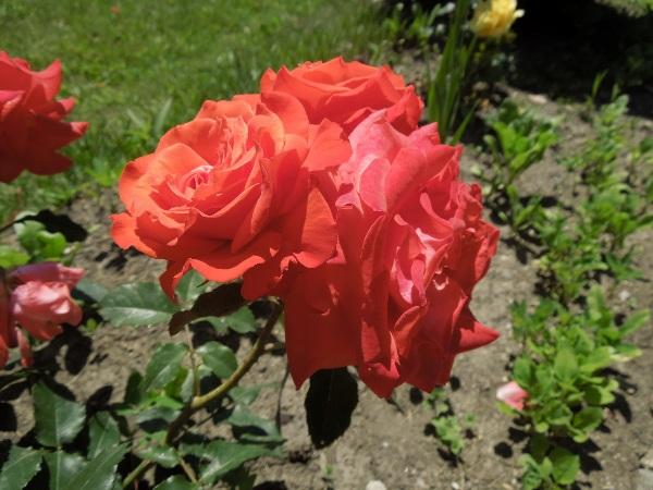 Flori 363