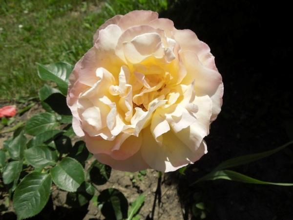 Flori 364