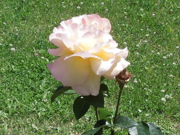 Flori 365