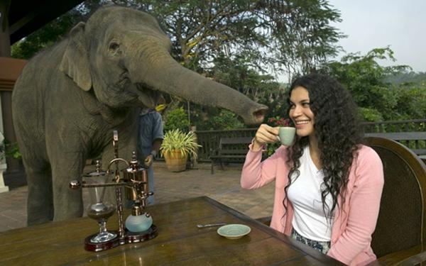 cafea-elefant