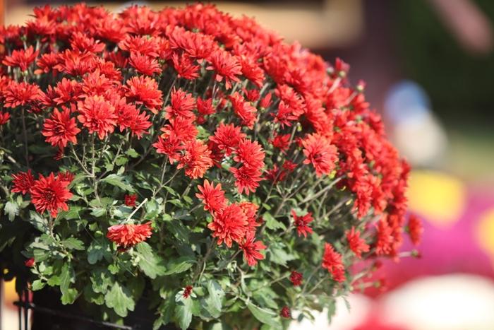 Flori 008