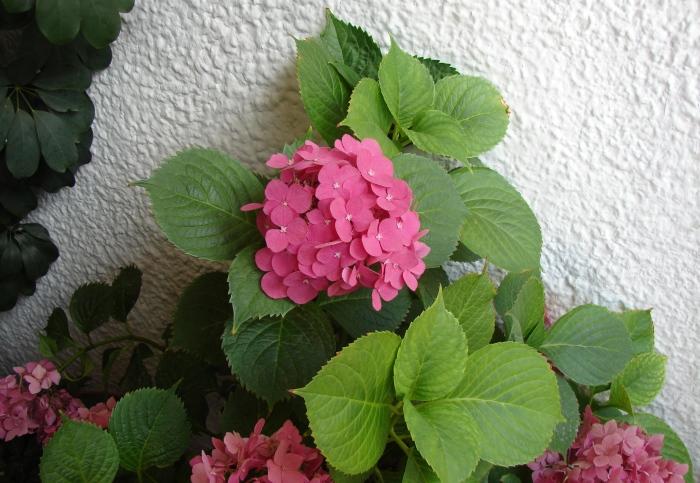 Flori 278