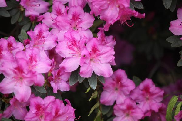 Flori 295