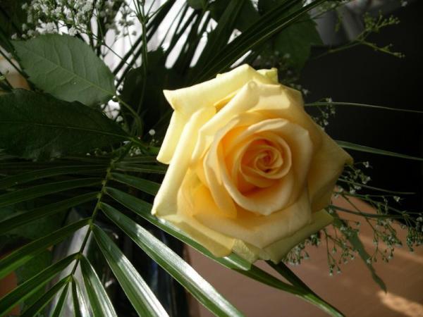 Flori 553