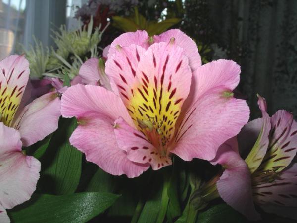 Flori 539