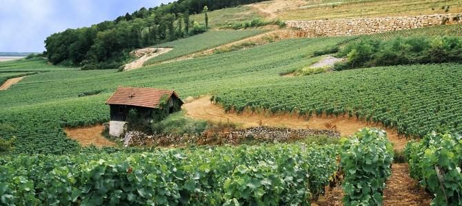 Regiunea viticolă Bourgogne