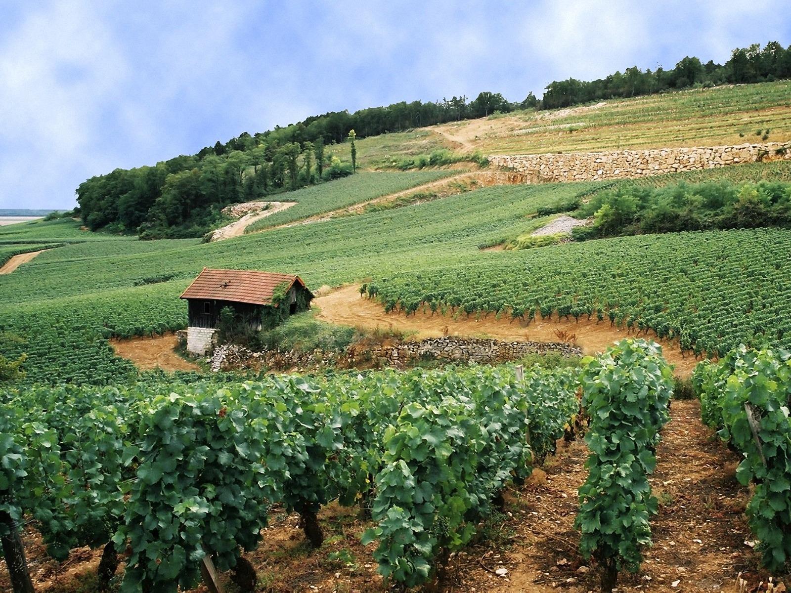 Bourgogne-03