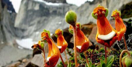 Orhidee Extraterestri