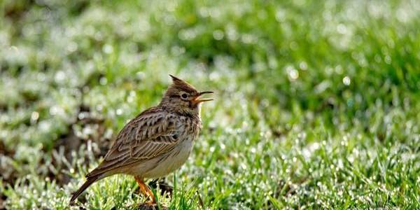 Păsările mici din Delta Dunării