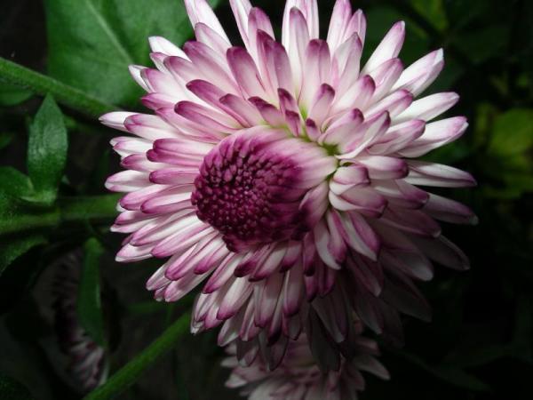 Flori 493