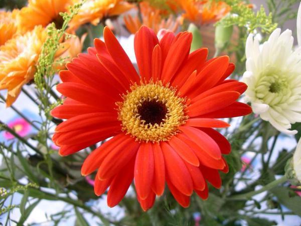 Flori 519