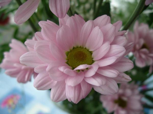 Flori 529