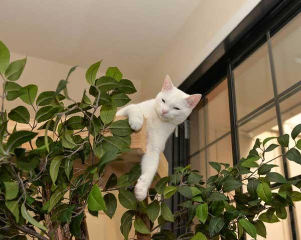 pom-pisica