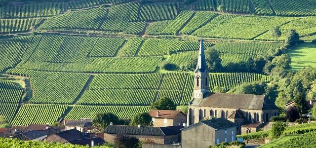 Regiunea viticolă Provence