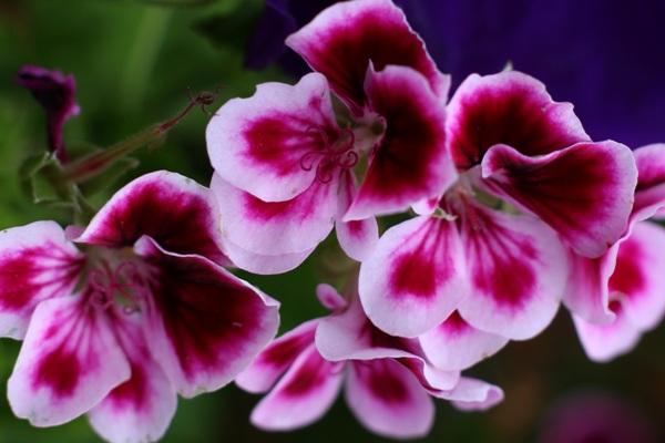 Flori-733
