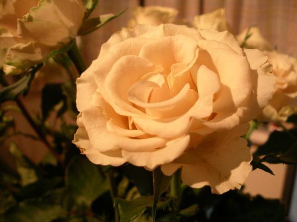 Flori 541