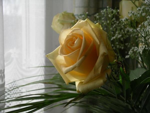 Flori 551
