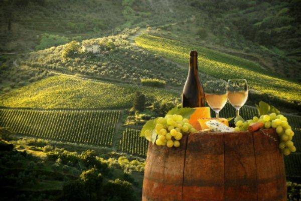 viticultura-Italia-01