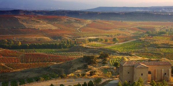 Spania, cea mai mare ţară cultivatoare de viţă-de-vie