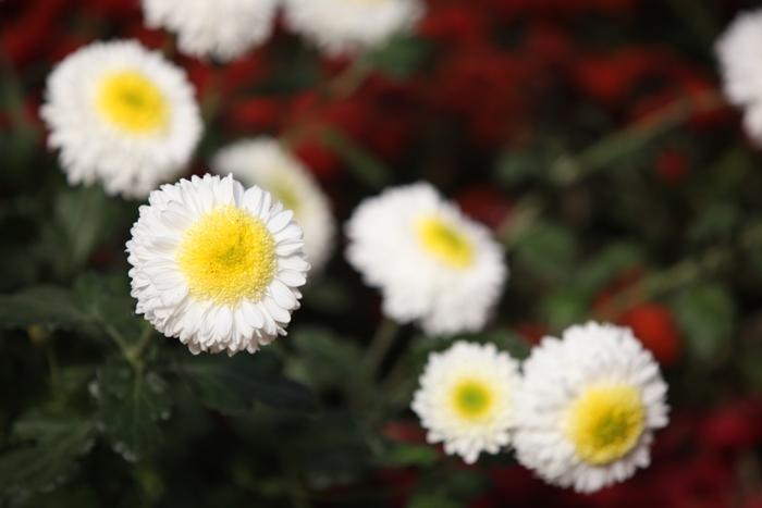 flori-110